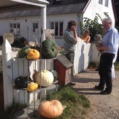 Birkely Grøntsager - foto: Anne Marie Karlsson