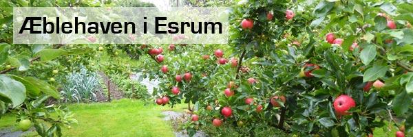 Æblehaven i Esrum