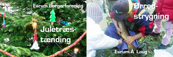 Juletræstænding og Ørredstrygning i Esrum