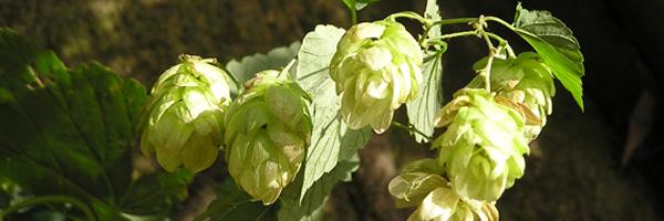 Ølsmagning i Esrum